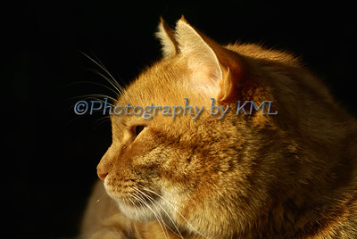 Cat profile in the evening light