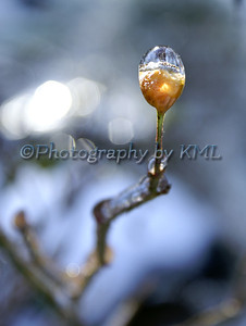 an ice drop on a rose hip