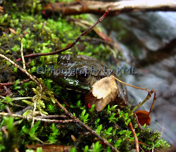 a frog camouflaged in moss and leaves