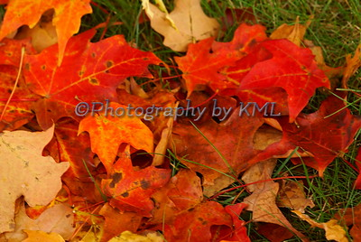 bright autumn leaves against the green grass