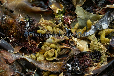 different varieties wet seaweed at the ocean