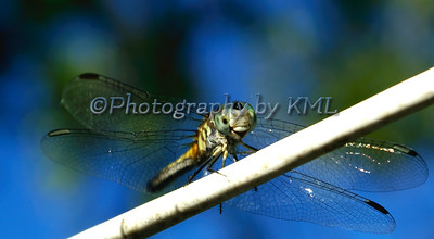 a macro of a dragonfly against the sky