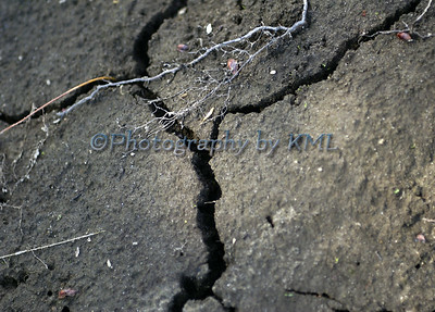 a y shaped crack in the dirt