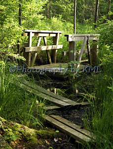a wood bridge in the middle of a swamp