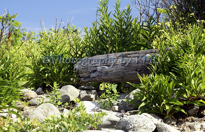 driftwood surrounded by overgrown greenery