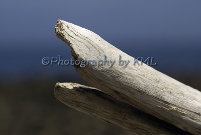 driftwood in the abstract shape of a shark