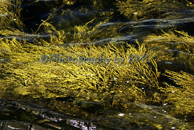 flowing seaweed under water