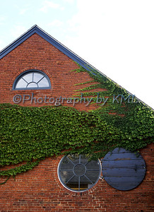 green ivy on a brick building with round windows