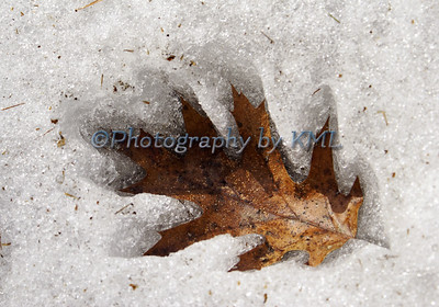 oak leaf in the white snow